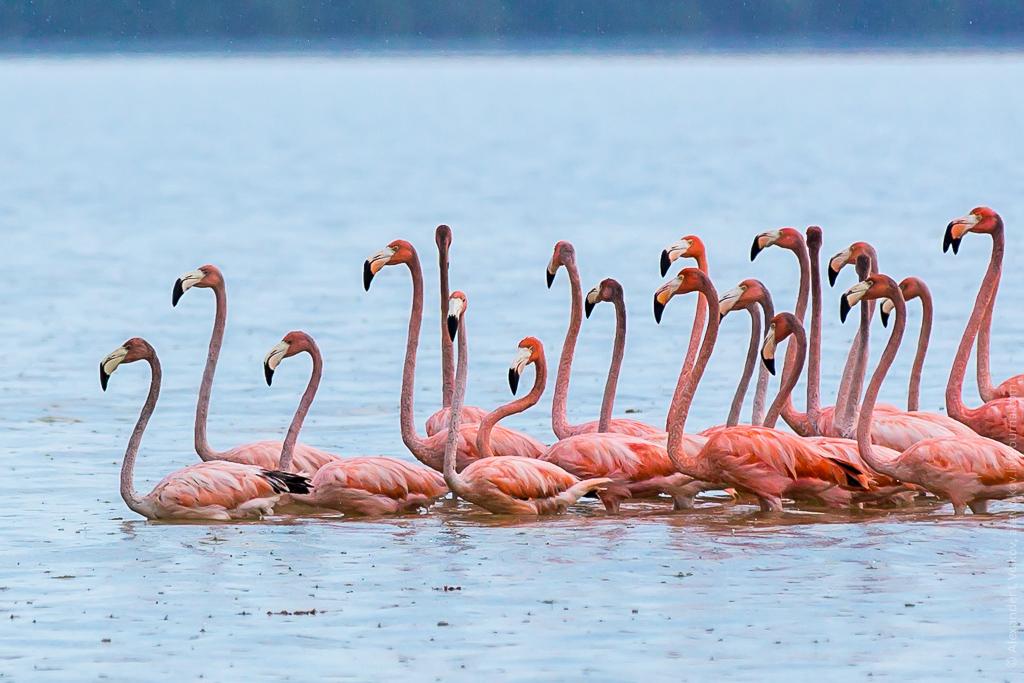 7 день Природный парк Селестун